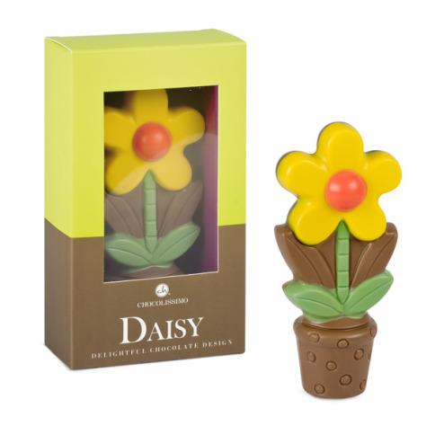 czekoladowy kwiatek daisy